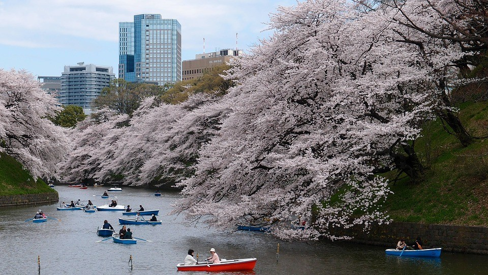 Driving Business Operations in Tokyo